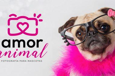 Amor Animal – Fotografía para Mascotas 🐾