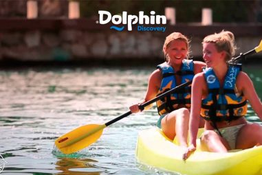 Day Pass Dolphin Discovery  $449 mxn – Promoción con membresía Acceso Sin Limite