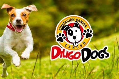 Diligo Dogs Cancún – Educación Canina